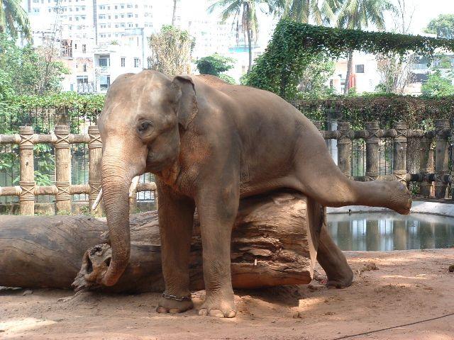 Elephantrubs