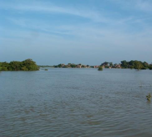 Floodedpaddyfields
